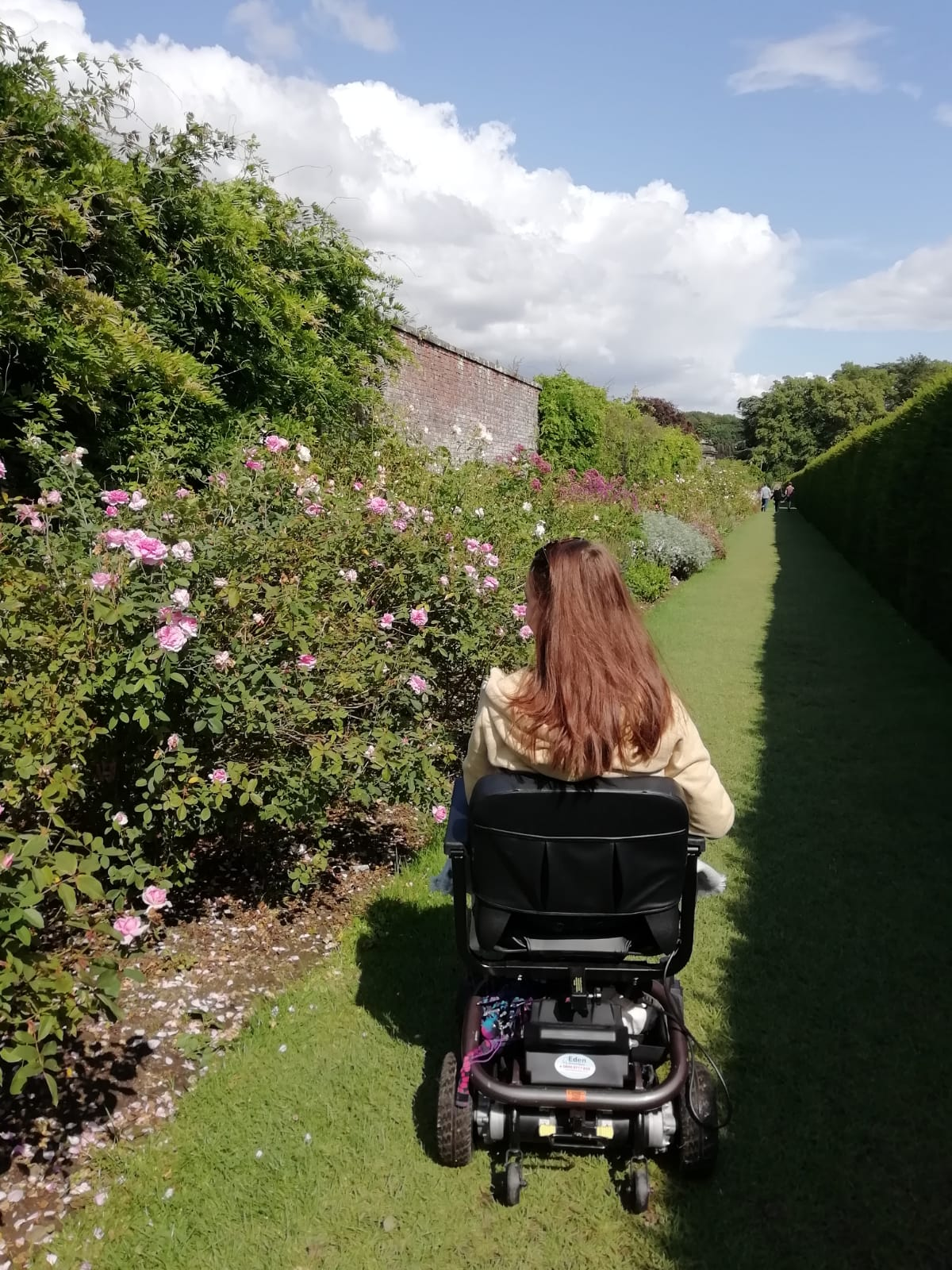 pippa in powerchair with back to camera, driving along and looking at pretty rose displays to the left